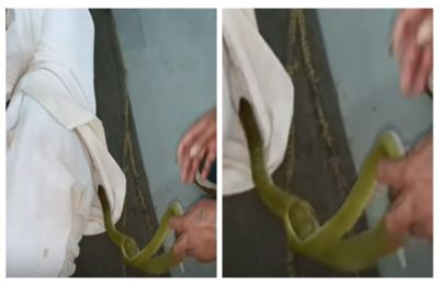 Venomous green snake removed from sleeping man's shirt, WATCH scary video