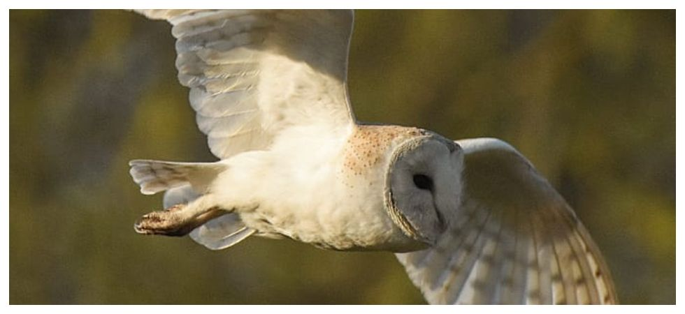 Barn owls may hold key to navigation, location devices says study (Photo: Instagram)