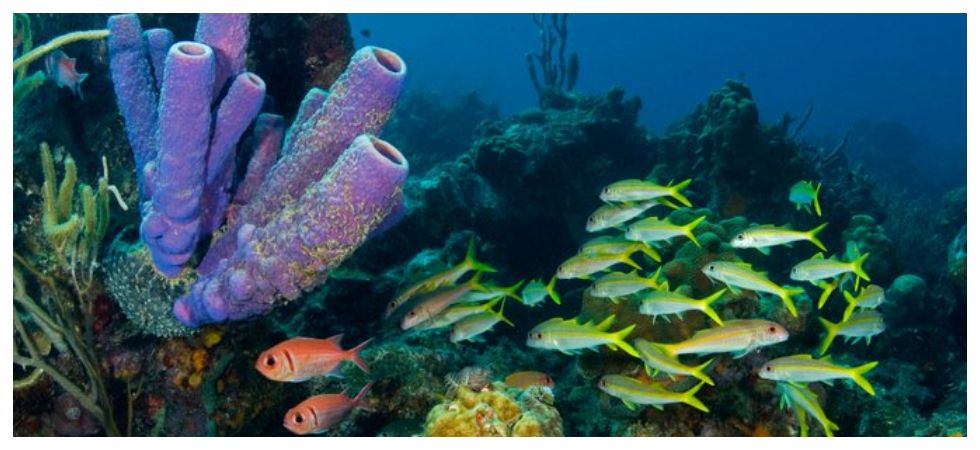Heatwaves kill coral reefs far faster than thought (Photo: Twitter)