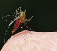 Possible to eradicate malaria, but probably not soon: United Nations