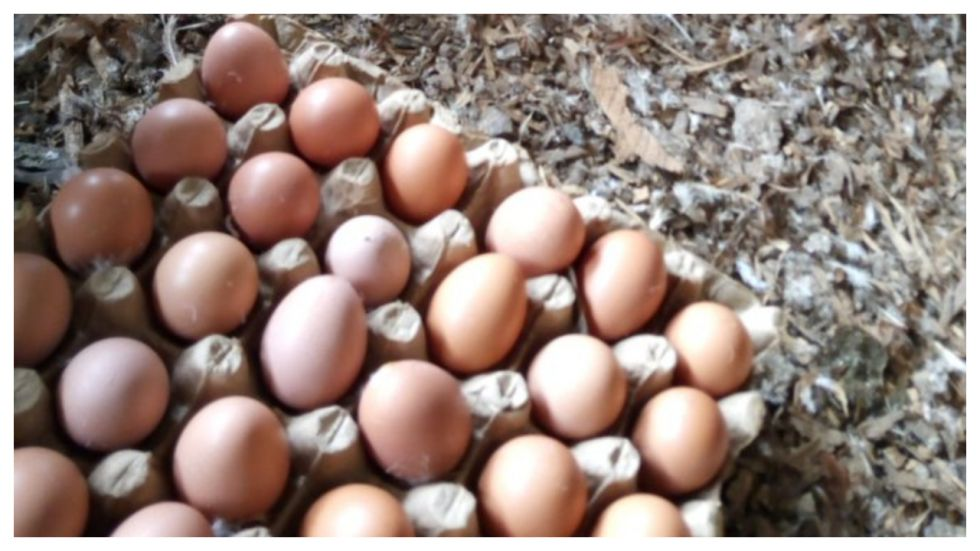 Man Dies After Eating 41 Eggs For Rs 2,000 Bet