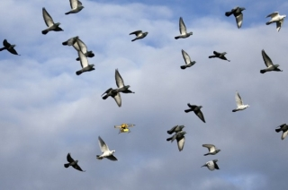 China launches robotic bird drones to keep a tab over its citizens