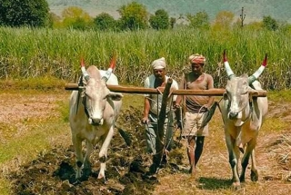 Breaking: Government extends PM-KISAN Pension Yojana to all farmers
